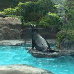 上野動物園のハシビロコウがキャラが立っていた(写真撮り忘れ・・・)Tokyo 20160502 10360933180 150x150