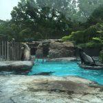 上野動物園のハシビロコウがキャラが立っていた(写真撮り忘れ・・・)Tokyo 20160502 10361733180 150x150