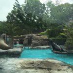 上野動物園のハシビロコウがキャラが立っていた(写真撮り忘れ・・・)Tokyo 20160502 10374033180 150x150