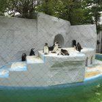 上野動物園のハシビロコウがキャラが立っていた(写真撮り忘れ・・・)Tokyo 20160502 12155233180 150x150