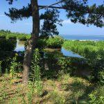 プレジャーガーデン&グラスハウス 国営ひたち海浜公園2016Ibaraki 20160716 13563633180 150x150