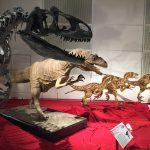 ギガ恐竜展2017@幕張メッセChiba 20170716 134234024 150x150