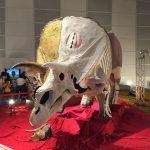 ギガ恐竜展2017@幕張メッセChiba 20170716 134316024 150x150