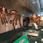 ギガ恐竜展2017@幕張メッセChiba 20170716 134723024 150x150