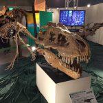 ギガ恐竜展2017@幕張メッセChiba 20170716 134836024 150x150