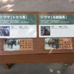 上野動物園のハシビロコウがキャラが立っていた(写真撮り忘れ・・・)Tokyo 20170503 101236024 150x150