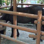 上野動物園のハシビロコウがキャラが立っていた(写真撮り忘れ・・・)Tokyo 20170503 101252024 02 150x150