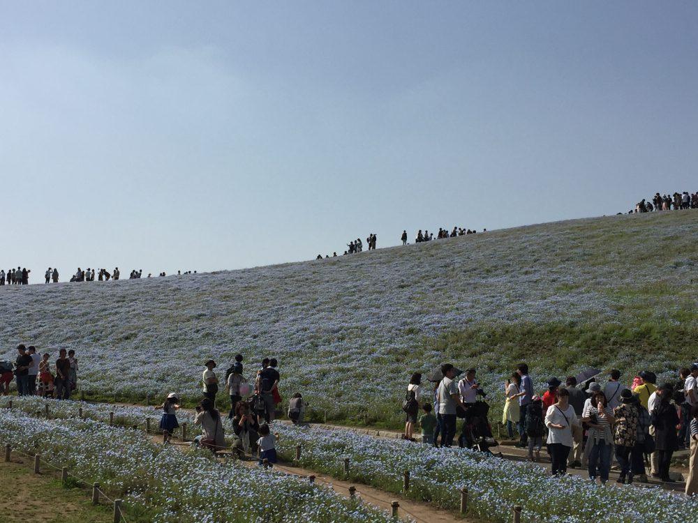ネモフィラと見晴らしの丘